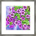 Aloha Purple Sky Calibrachoa Abstract II Framed Print