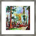 American National Parks Redwood Trees Framed Print