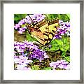 Yellow Eastern Tiger Swallowtail Series Framed Print