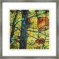 Amongst The Branches Framed Print