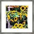 Amsterdam Sunflowers Framed Print