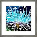 An Abstract Scene Of Sea Anemone 1 Framed Print
