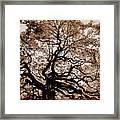 Angel Oak Johns Island Sc Framed Print