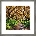 Angel Oaks In Sunshine Framed Print
