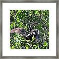 Anhinga In The Sun Framed Print