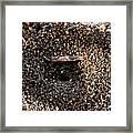 Animal Homes Ants Maybe Framed Print