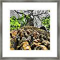 Ants View Framed Print