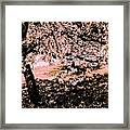Apollo And The Muses Framed Print