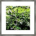 Apple Blossom Digital Painting Framed Print