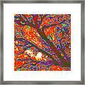 Arboreal Plateau 44 Framed Print