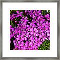 Arctic Wild Flowers Framed Print