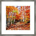 Arethusa Falls Trail Framed Print by Greg Fortier
