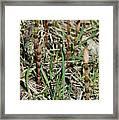 Asparagus In The Wild Framed Print