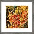 Aspen Colors In Dillon Colorado Framed Print