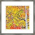 Aspen Gold And Orange Framed Print
