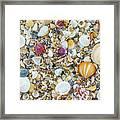 Atlantic' Shells Color Framed Print