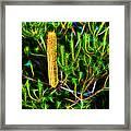 Australian Banksia Framed Print