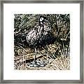 Australian Emu Framed Print