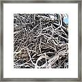 Australian Roots Framed Print