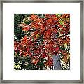 Autumn Afternoon Framed Print