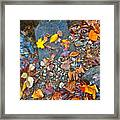 Autumn B 2015 116 Framed Print