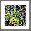Autumn Blue  Framed Print