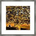Autumn Boredom Framed Print