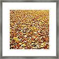 Autumn Carpet Framed Print