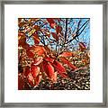 Autumn Colors 06 Framed Print