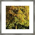 Autumn Colors 8 Framed Print