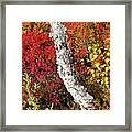 Autumn Foliage In Finland Framed Print