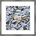 Autumn Frost Framed Print