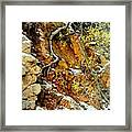 Autumn High.. Framed Print