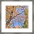 Autumn In Full Swing Framed Print