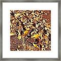 Autumn Is On The Way Framed Print