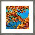 Autumn Leaves 7 Framed Print