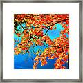 Autumn Leaves 8 Framed Print