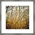 autumn Lines Framed Print