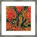 Autumn Maple Bark Framed Print