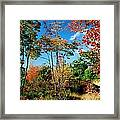 Autumn Maples Framed Print
