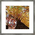 Autumn Rainbow Framed Print