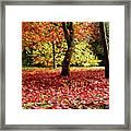 Autumn Reds Framed Print