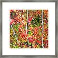 Autumn Sanctuary Framed Print