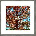Autumn Star- Paint Framed Print