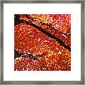 Autumn Tree Art Prints Orange Red Leaves Baslee Troutman Framed Print