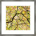 Autumnal Colours Framed Print