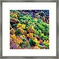 Autumn's Palette Framed Print