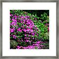 Azalea Waterfall At The Azalea Festival Framed Print