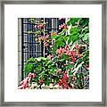 Azaleas At The Window   Framed Print