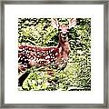 Babe In The Woods Framed Print